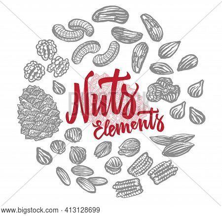 Sketch Nuts Elements Round Composition With Brazil Peanut Almond Walnut Pecan Hazelnut Pistachio Cas