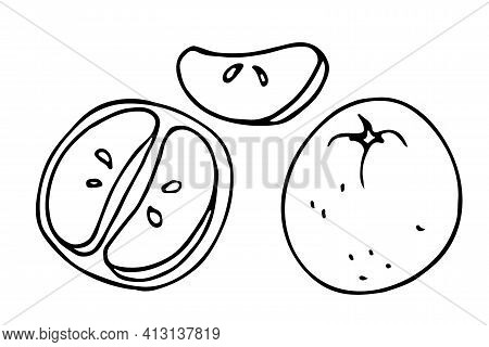Tangerine Fruit Hand Drawn Sketch Isolated On White Background. Doodle Outline Vector Illustration.