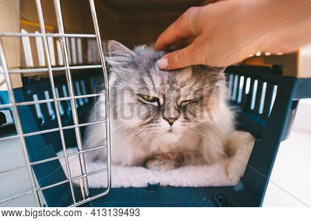 Woman Hand Petting Beautiful Relaxed Persian Cat Lying Inside Plastic Pet Carrier Or Travel Box. Pet