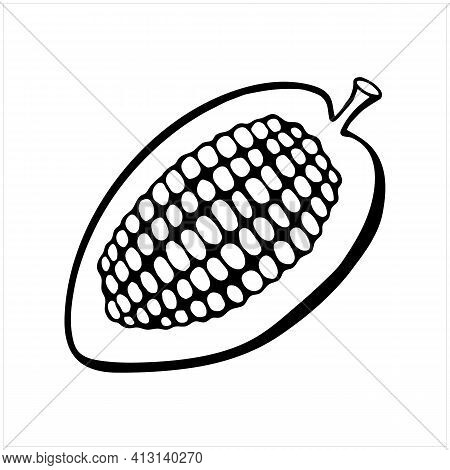 Cacao Fruit, Raw Cacao Beans, Cocoa Pod, Isolated Hand Drawn Vector Illustration In Black And White