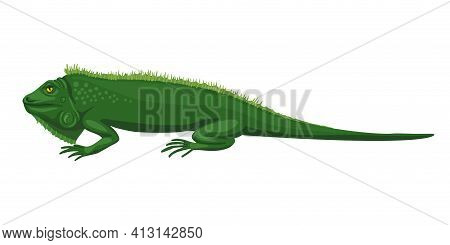 Iguana, Green Lizard. The Animal Lies, Disdainful Eyes, A Lazy Beast. Fun Character Illustration, Gr