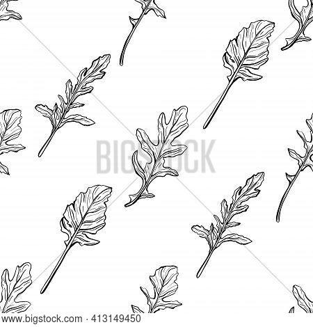 Arugula Seamless Pattern. Arugula Leaves On A White Background. And Aromatic Italian Seasoning. Hand