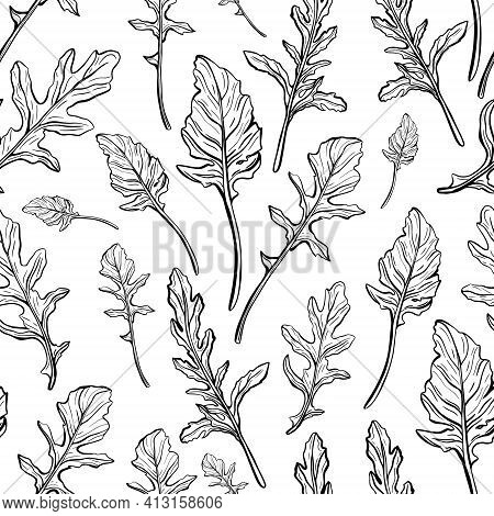 Arugula Seamless Pattern. Arugula Leaves On A White Background. And Aromatic Italian Seasoning. Hand
