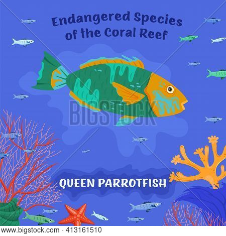 Queen Parrotfish. Coral Reef Inhabitants. Endangered Fish Species.
