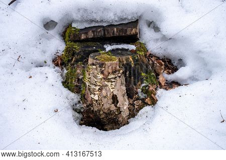 A Picturesque Old Tree Stump Covered With Moss And Mushrooms. Thawed Patches In The Snow. A Stump Ap