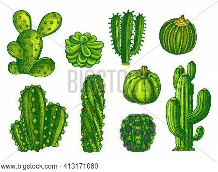 Cactus And Succulents, Agave Sketch Plants Vector