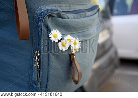 Travel, Holidays, Vacation: White Daisies Inside Backpack. Flowers In Girl's Backpack. Five Field Da