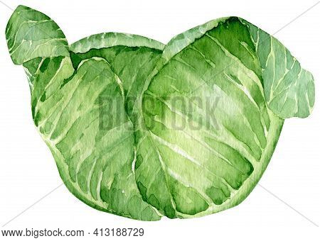 Watercolor Hand Drawn Illustration Of Green Cabbage. Leafy Vegetable. Farm Harvest.