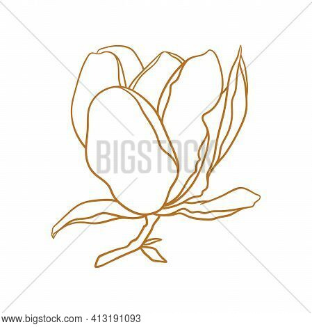 Magnolia Flower With Branch, Thin Line Drawing On White Background. Floral Vector Sketch In Gold Col