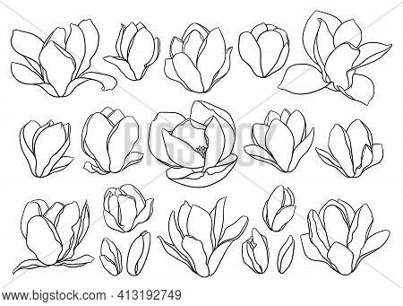 Set Of Magnolia Flowers, Thin Line Drawing On White Background. Floral Vector Sketch In Trendy Style