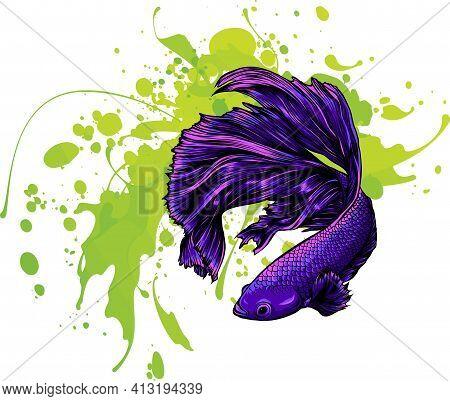 Colorful Betta Fish With Water Splash Vector Illustration.