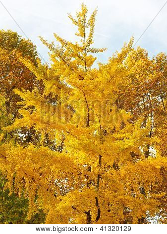 Fall Foliage Scenery - Tree with intense fall colors. poster