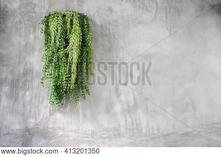 Green Ivy Leaves Background Of Dave (dischidia Nummularia Variegata), Green Creeper Plant Hanging On