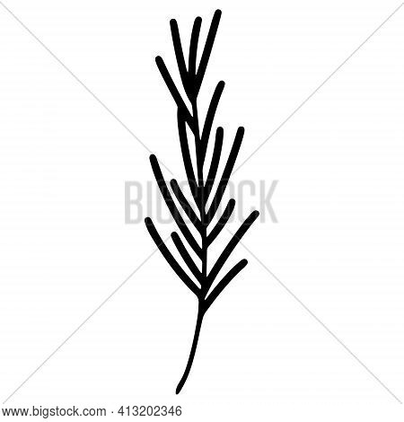 Rosemary Vector Icon. Hand Drawn Spring Grass Isolated On White Background. Rosemary Branch Silhouet