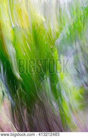 Impressionism in nature palm fronds in motion blur