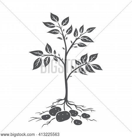 Potato Plants With Tubers. Glyph Icon, Vector Cut Monochrome Badge Of Farm Plant Potatoes In Retro S