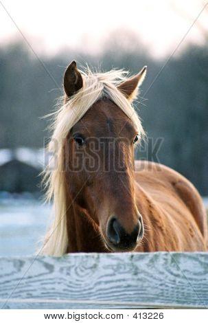 Pretty Blond Horse
