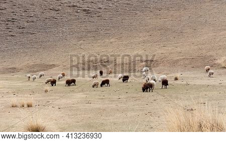 Sheep Grazing On Mountain Or Hill Meadow. Rural Landscape.