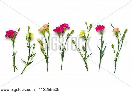 Bouquet Of Pink Carnation Flower Isolated On White Background Top View Flat Lay Holiday Card 8 March