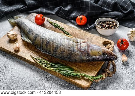 Zander, Walleye With Herbs. Raw Fish. Gray Background. Top View