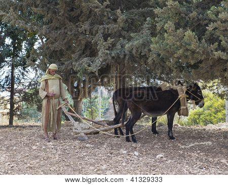 Palestinian Plowing