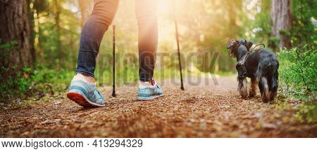 Young Woman Hiking And Going Camping In Nature. Person With Sticks And A Dog Walking And Running In