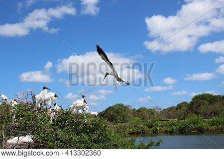 One Wood Stork Flies In The Sky.