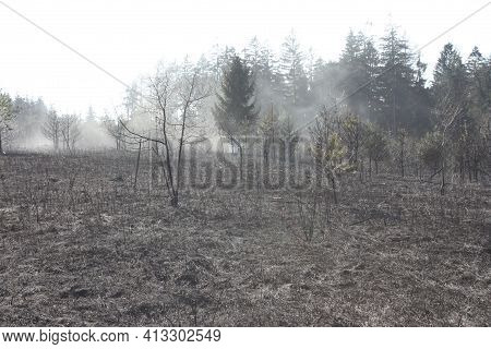 Nature After A Forest Fire. Charred Forest After A Hot Fire. Forest Fire After A Dry Period - Global