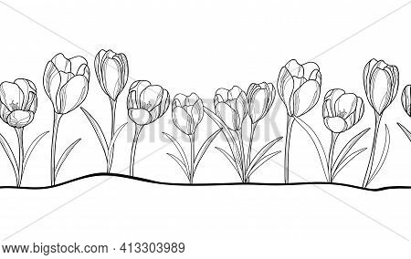 Vector Horizontal Seamless Pattern With Outline Crocus Or Saffron Flower And Leaves In Black On The