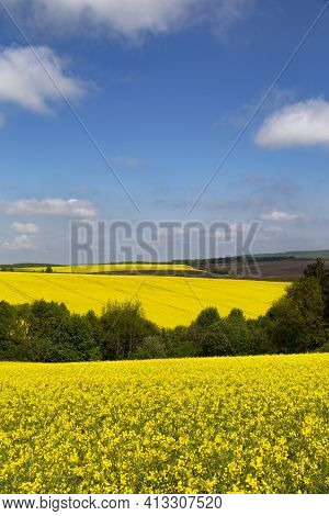 Panorama Of Flowering Rapeseed Fields On The Hills Among Green Trees. Yellow Rape. Agricultural Fiel
