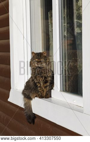 Portrait Of A Brown Cat Sitting On A White Window