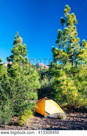 Yellow Tent Camping On Rocky Campground Under Bright Green Pine Trees In Forest. Backpacking In Natu