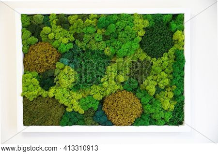 Multicolored Preserved Canned Moss For Sustainable Interior Design And Natural Wall Decor, Picture O