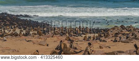 Panorama Of Fur Seals At Cape Cross At The Skelett Coastline Of Namibia At The Atlantic Ocean, Cape