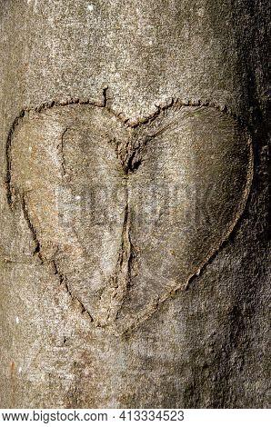 A Heart Carved Into Tree Bark. High Quality Photo