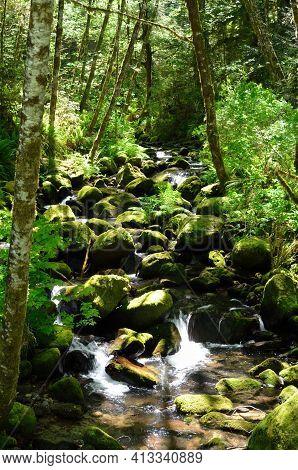 Rocky Stream Of Elk Creek In Rogue River-siskiyou National Forest, Oregon
