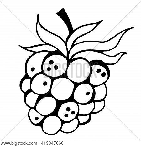 Raspberry vector icon. Isolated illustration of a summer berry on a white background. Raspberry outline, doodle