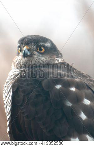 Bird Of Prey With Funny Facial Expression