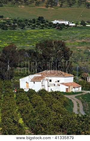 Country finca and orange grove, Andalusia, Spain.