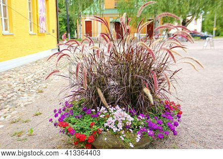An Interesting Composition In A Flowerpot, Tall Grass With Spikelets On The Bottom, Small Flowers, W