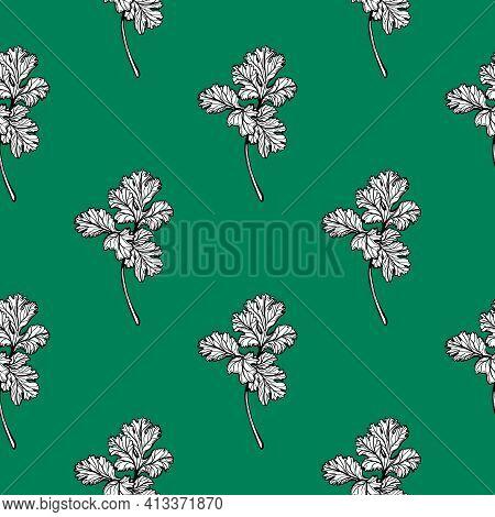 Parsley Pattern. Aromatic Italian Useful Herbs. Hand-drawn Vector Illustration