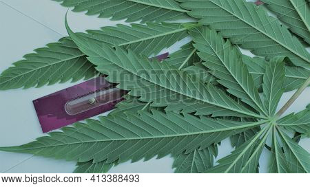 Cut Textured Cannabis Leaves Along With Lilac Plant Seed Packaging, Concept Of The Worldwide Spread