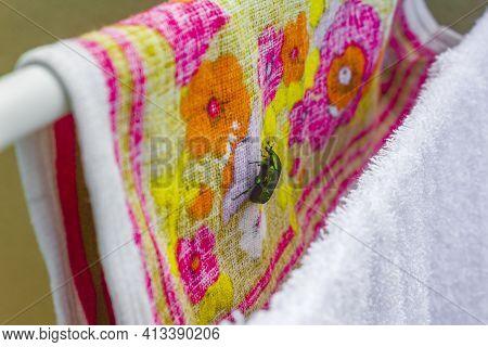 Large Green Shiny Rose Beetle On Towels Landed Croatia.