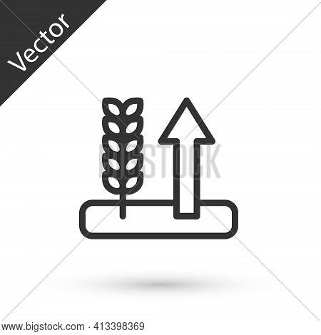 Grey Line Cereals Set With Rice, Wheat, Corn, Oats, Rye, Barley Icon Isolated On White Background. E