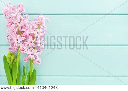 Pink Hyacinth Flower With Green Leaves On Mint Wooden Background. Summer Or Springtime Concept. Flat