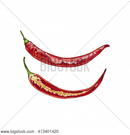 Whole And Half Pepper Cayenne. Vector Vintage Hatching Color Illustration. Isolated On White Backgro
