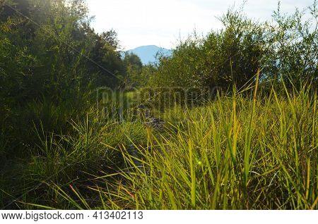 Beautiful Nature Landscape - Alpine Meadow. Grass Closeup With Sunbeams. Beautiful Nature Landscape