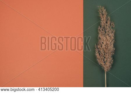 Top View Of Pampas Dry Grass Over Terracotta Red And Green Background With Copy Space. Earth Trendy