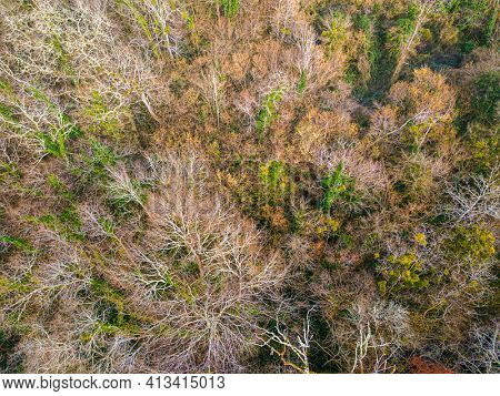 Top aerial view of a deciduous tree forest in winter, Gironde, France