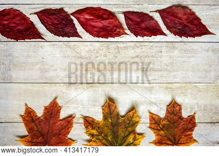 Colorful Dry Leaves Are Laid Out In Rows On Old Wooden Surface. Autumn Composition, Herbarium. Top V